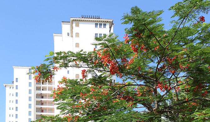 长滩雨林酒店式公寓