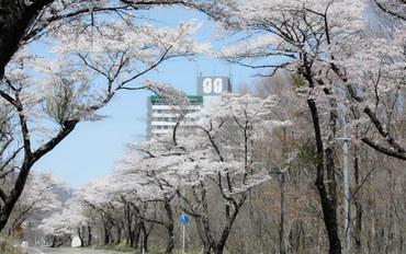 宫城酒店公寓住宿:乐乐渡假酒店·绿绿