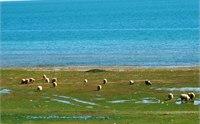 塔尔寺到青海湖怎么走 2013塔尔寺到青海湖旅游攻略