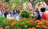 佛山南风古灶创意花市 2014南风古灶创意花市时间 地点 活动一览