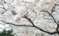 2014青岛中山公园门票价格 青岛中山公园开放时间