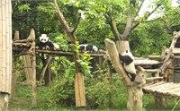 成都熊猫基地地址 成都熊猫基地地图