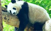 成都熊猫基地住宿 成都熊猫基地周边酒店推荐