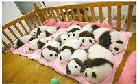 成都熊猫基地旅游路线 成都熊猫基地一日游攻略