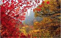 秦皇岛哪里可以看红叶 秦皇岛赏红叶好去处
