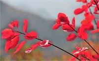 武汉哪里有红叶 武汉周边看红叶的地方