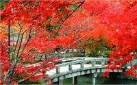 武汉哪里可以赏枫叶 武汉周边适合赏枫叶的地方