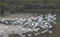 2015香港湿地公园观鸟节时间 2015香港湿地公园观鸟节活动一览