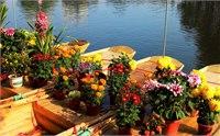 2015佛山水上花市时间/地点/门票 2015佛山水上花市活动一览
